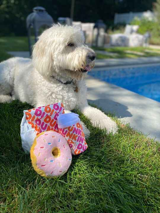 Calling all Dunkin' dogs! Grab your owner and zoomie over to Dunkin' to grab our latest Bark toys. With a donation of $1...