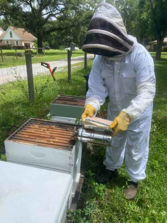 Pulled honey today for the first time in a while!  We got a delicious dark sweet batch that is just a perfect topping fo...